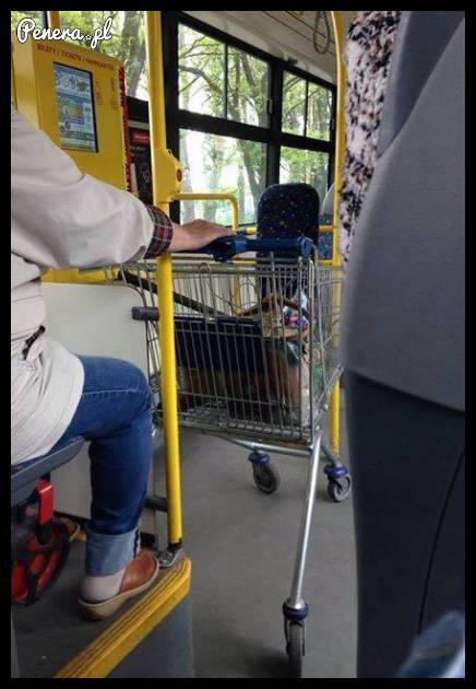 Leniwe babsko w autobusie z miasta Łodzi