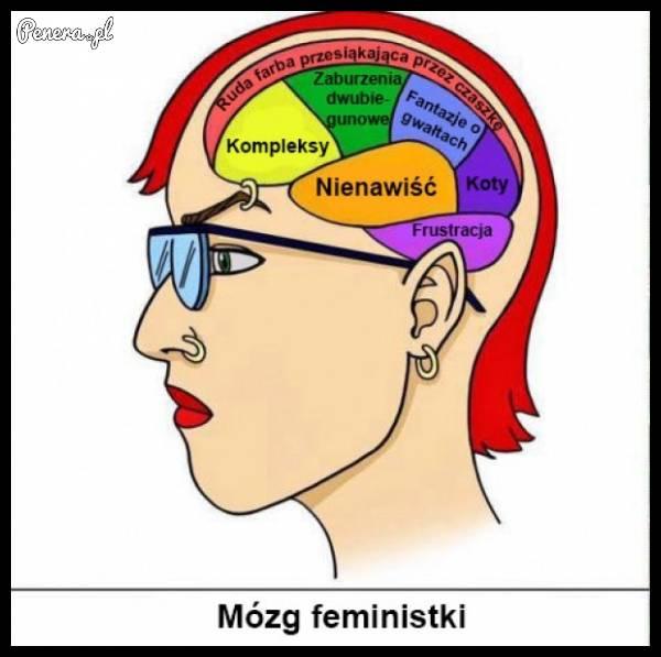 Tak wygląda schemat działania mózgu feministki