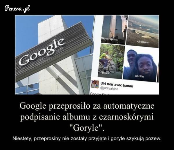 Gooogle chyba będzie musiało zapłacić za goryli