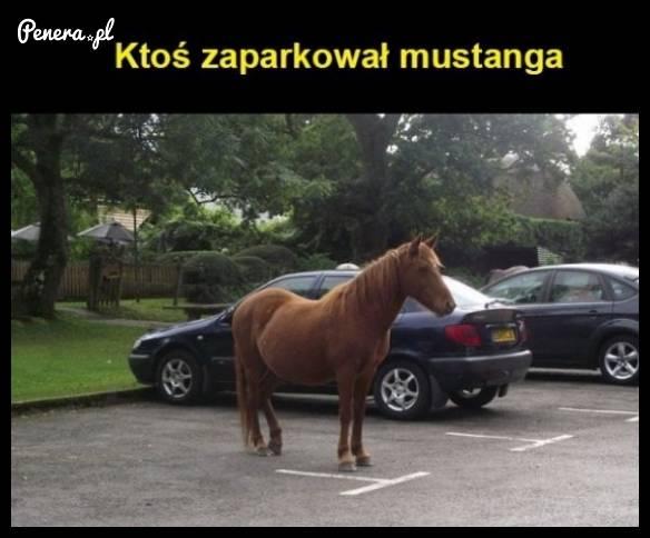 Ktoś zaparkował Mustanga