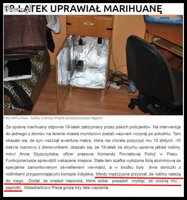 19-uprawiał marihuanę w biurku