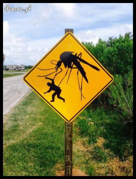 W Australii to dopiero mają komary
