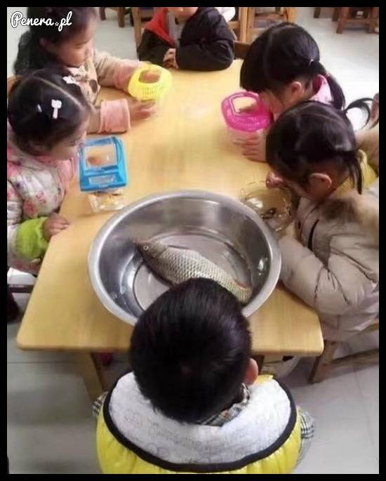 Niech każde dziecko przyniesie do przedszkola swoją rybkę