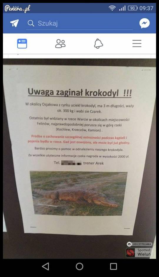 Uwaga zaginął krokodyl!