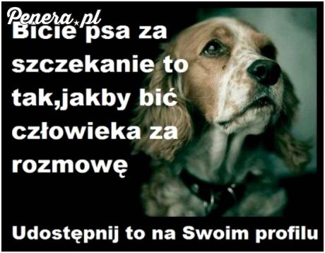 Bicie psa za szczekanie
