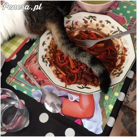 Esencja życia z kotem