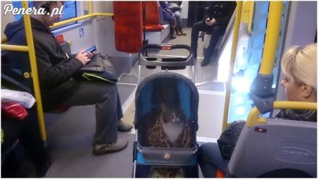 Nie ma to jak kot na spacerze w wózku