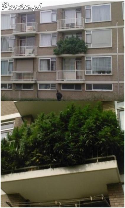 Nie ma to jak roślinki na balkonie