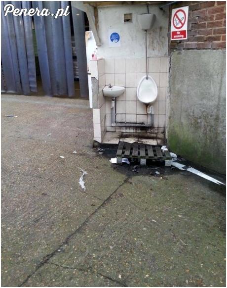 Piękna toaleta dla Polaków w jednej z angielskich firm