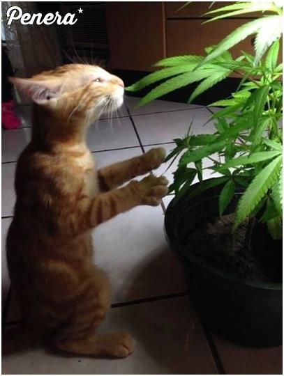Ten kotek wie co dobre :D