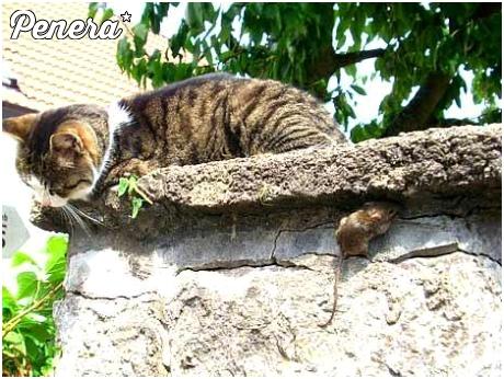 Typowa zabawa w kotka i myszkę