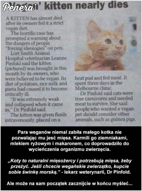 Weganie kontra natura kota