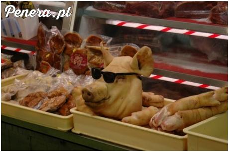 Wyluzowana świnia